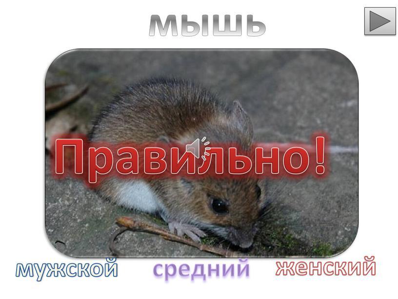 Правильно! мышь мужской средний женский