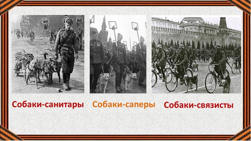 Собаки-санитары Собаки-саперы Собаки-связисты