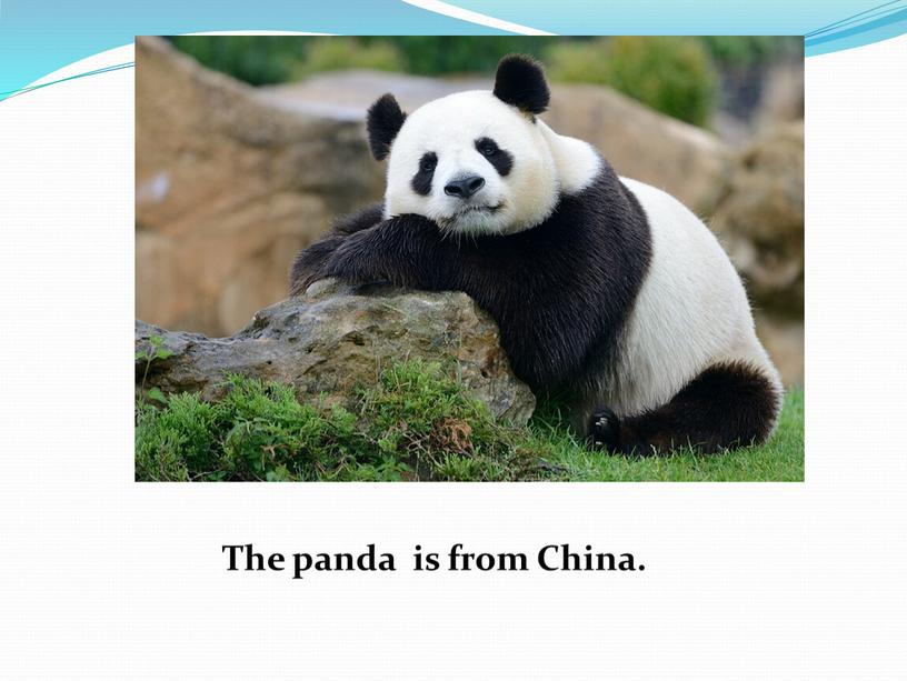 The panda is from China.