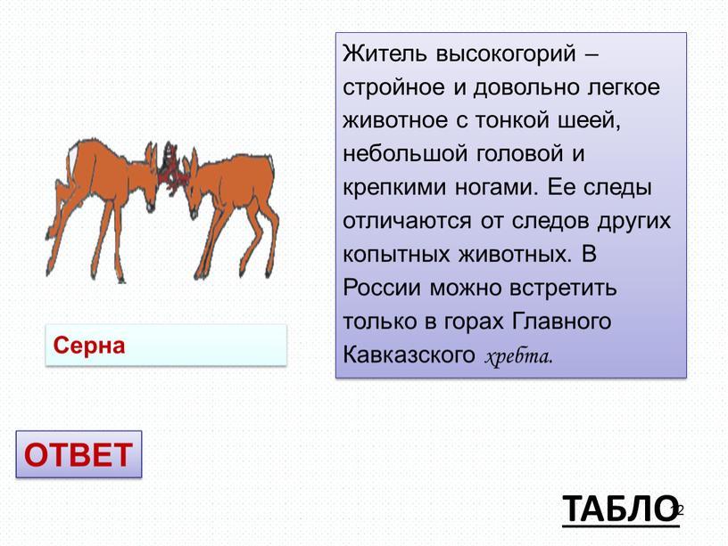 ТАБЛО Житель высокогорий – стройное и довольно легкое животное с тонкой шеей, небольшой головой и крепкими ногами