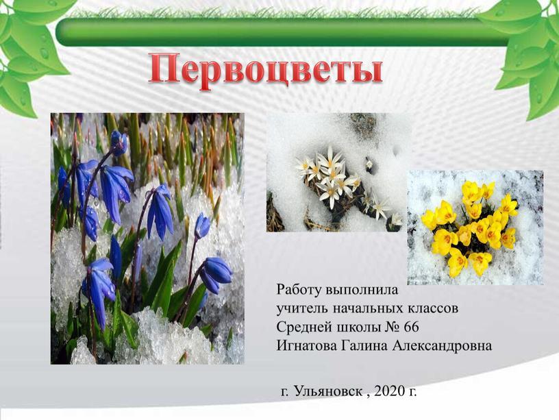 Первоцветы Работу выполнила учитель начальных классов