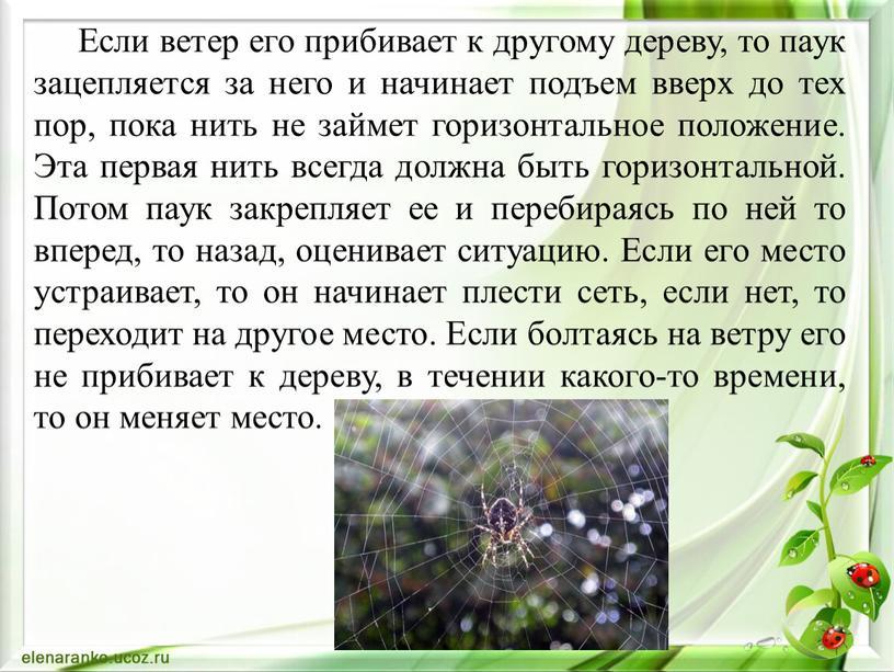 Если ветер его прибивает к другому дереву, то паук зацепляется за него и начинает подъем вверх до тех пор, пока нить не займет горизонтальное положение