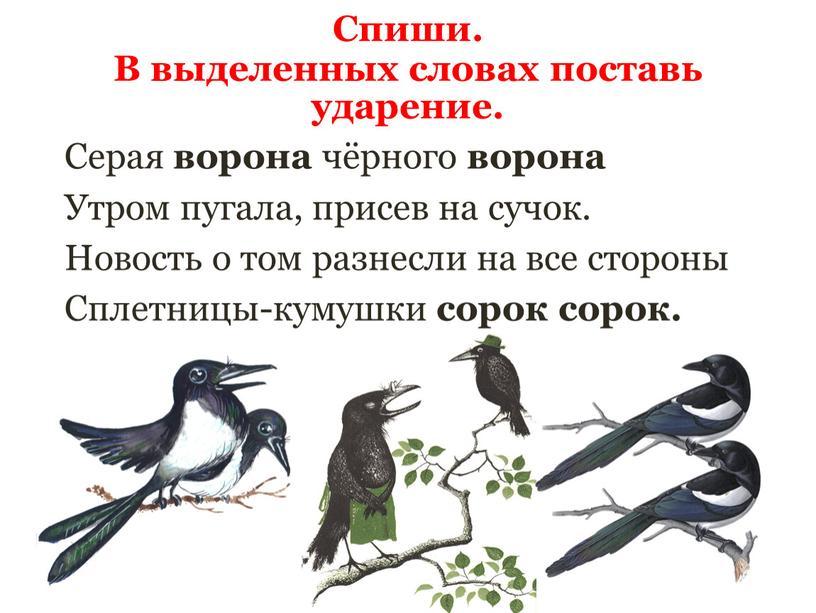 Серая ворона чёрного ворона