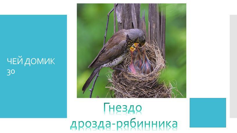 ЧЕЙ ДОМИК 30 Гнездо дрозда-рябинника