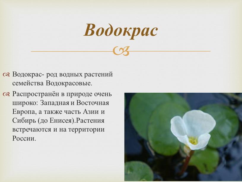 Водокрас- род водных растений семейства