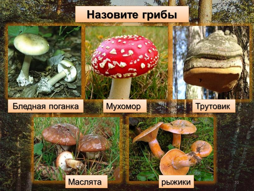 Назовите грибы Бледная поганка