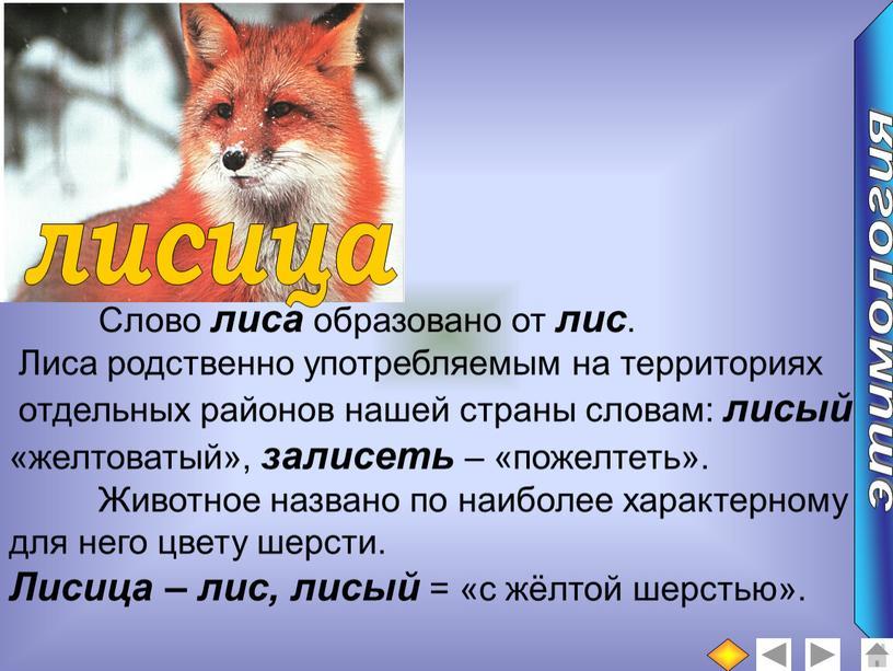 Слово лиса образовано от лис