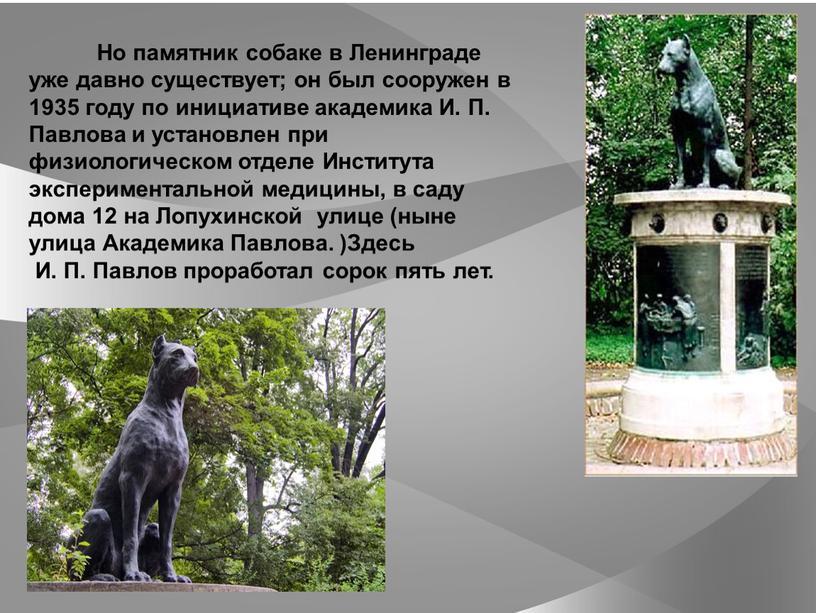 Но памятник собаке в Ленинграде уже давно существует; он был сооружен в 1935 году по инициативе академика