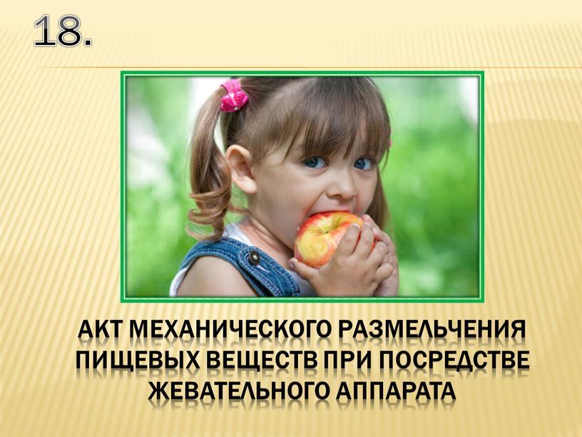 18. акт механического размельчения пищевых веществ при посредстве жевательного аппарата
