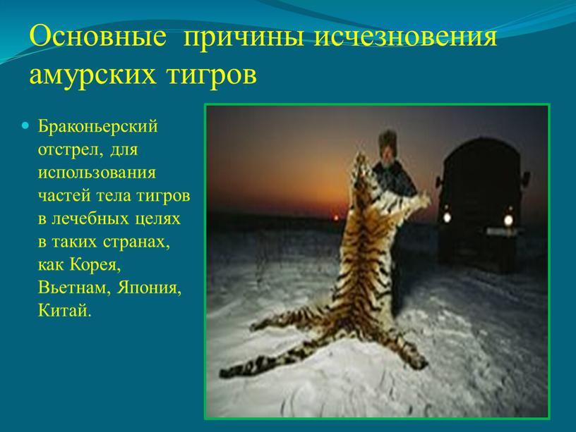 Основные причины исчезновения амурских тигров