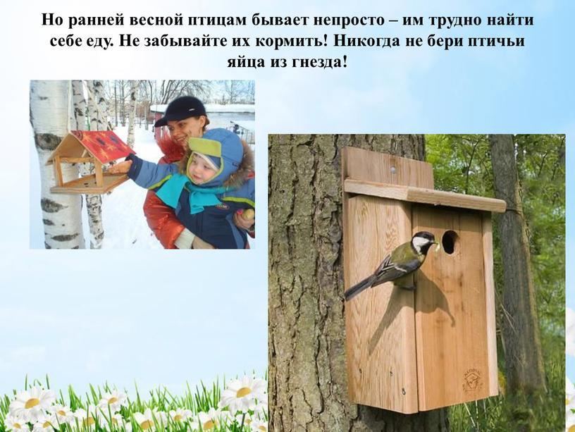 Но ранней весной птицам бывает непросто – им трудно найти себе еду