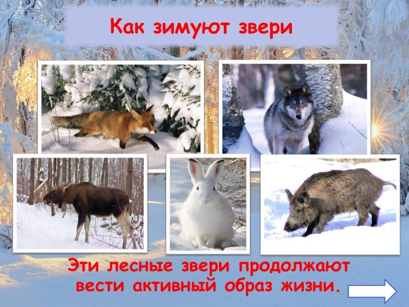Как зимуют звери Эти лесные звери продолжают вести активный образ жизни