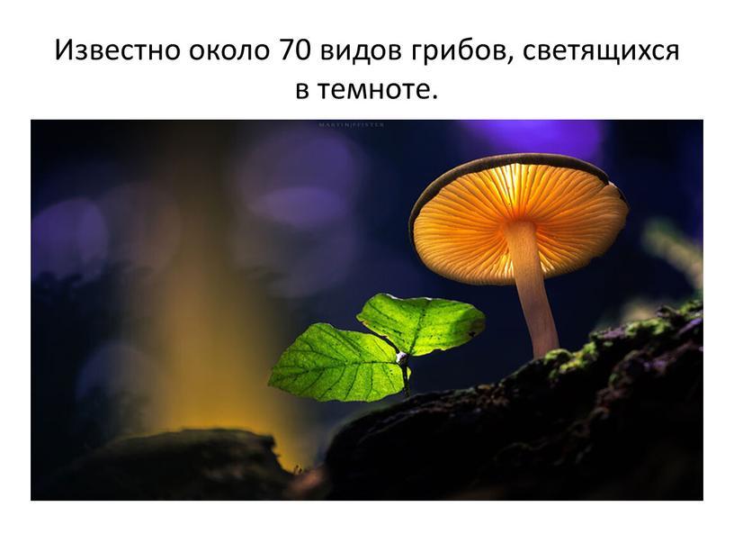 Известно около 70 видов грибов, светящихся в темноте