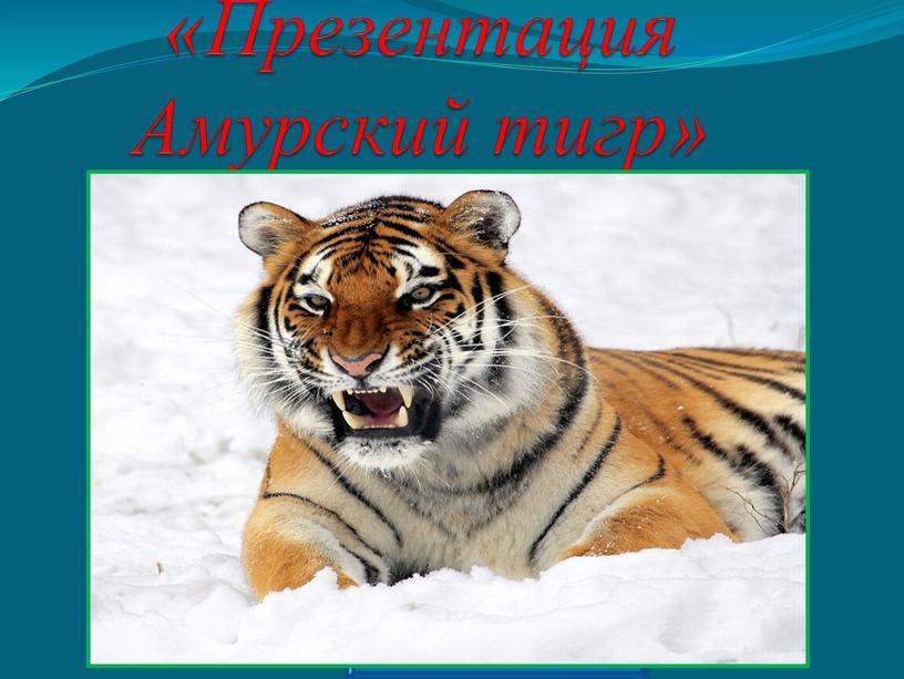Презентация Амурский тигр» Prezentacii