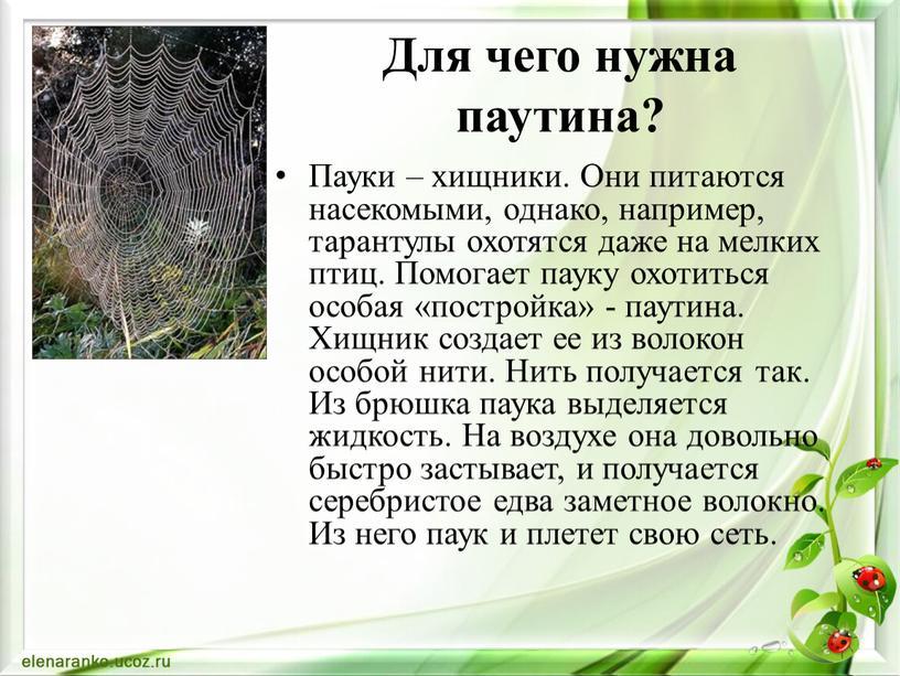 Для чего нужна паутина? Пауки – хищники