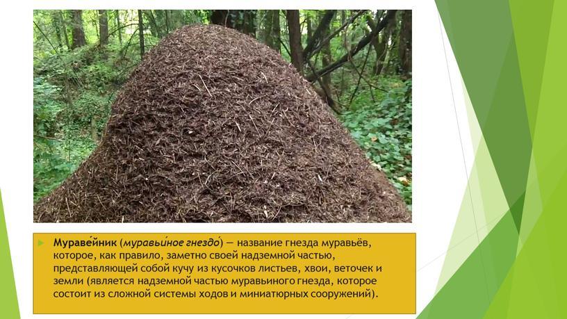 Мураве́йник ( муравьи́ное гнездо́ ) — название гнезда муравьёв, которое, как правило, заметно своей надземной частью, представляющей собой кучу из кусочков листьев, хвои, веточек и…