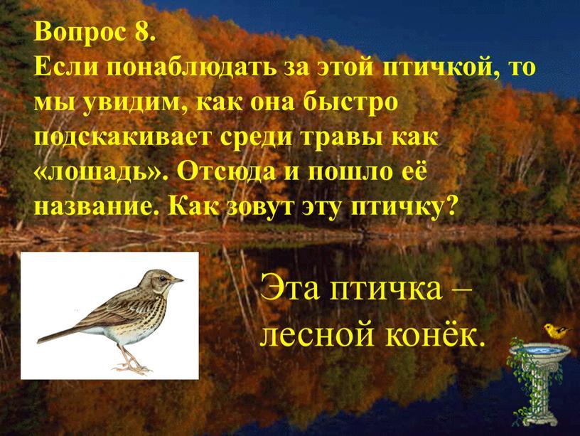 Вопрос 8. Если понаблюдать за этой птичкой, то мы увидим, как она быстро подскакивает среди травы как «лошадь»