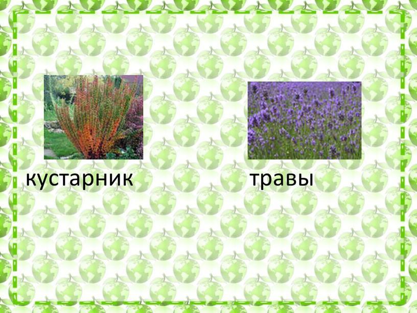 кустарник травы
