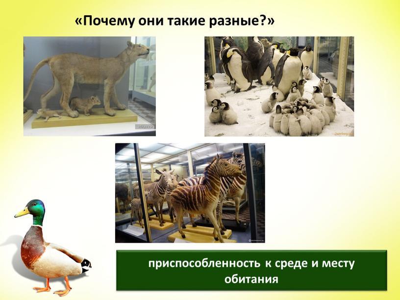 Почему они такие разные?» приспособленность к среде и месту обитания