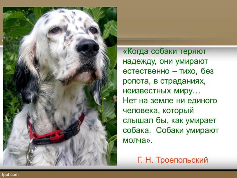 Когда собаки теряют надежду, они умирают естественно – тихо, без ропота, в страданиях, неизвестных миру…