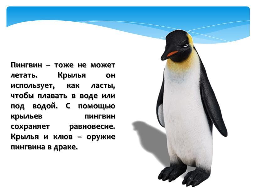 Пингвин – тоже не может летать
