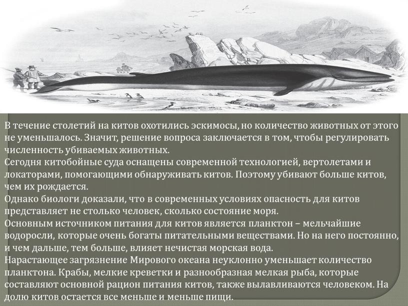 В течение столетий на китов охотились эскимосы, но количество животных от этого не уменьшалось