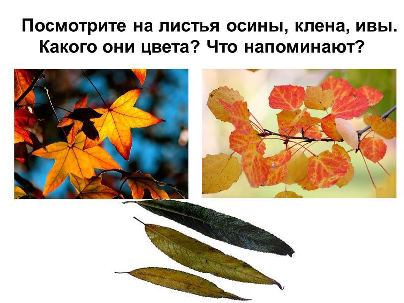 Посмотрите на листья осины, клена, ивы
