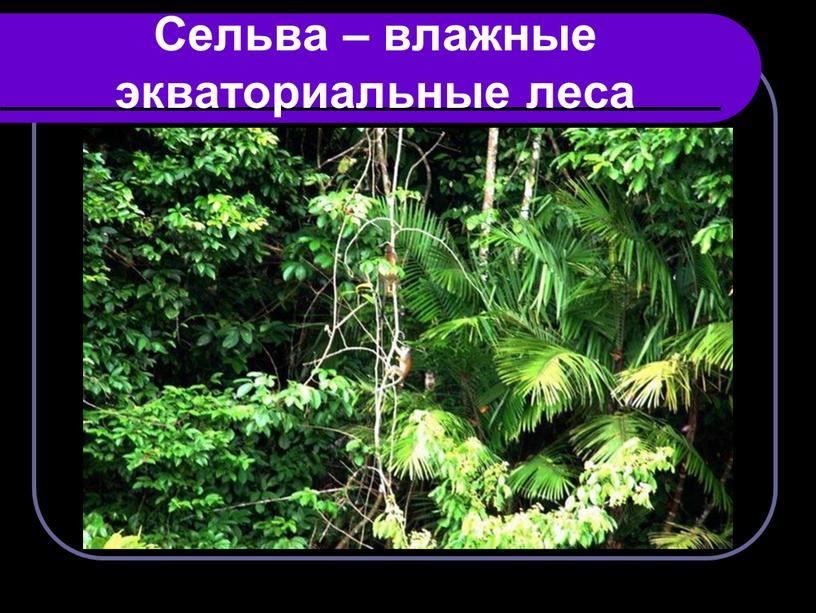 Сельва – влажные экваториальные леса