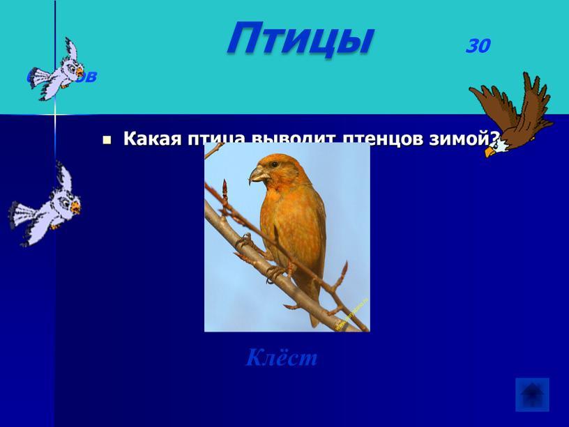 Птицы 30 баллов Какая птица выводит птенцов зимой?