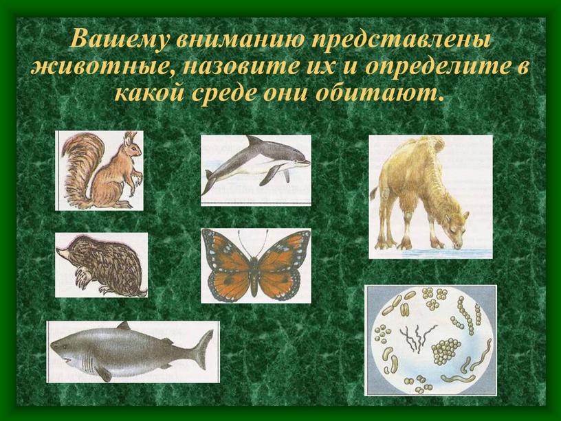 Вашему вниманию представлены животные, назовите их и определите в какой среде они обитают
