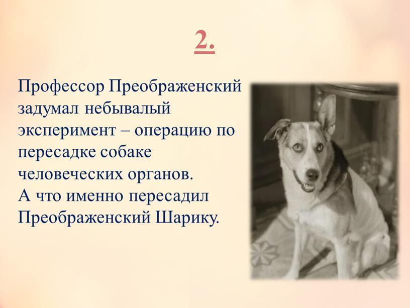 Профессор Преображенский задумал небывалый эксперимент – операцию по пересадке собаке человеческих органов