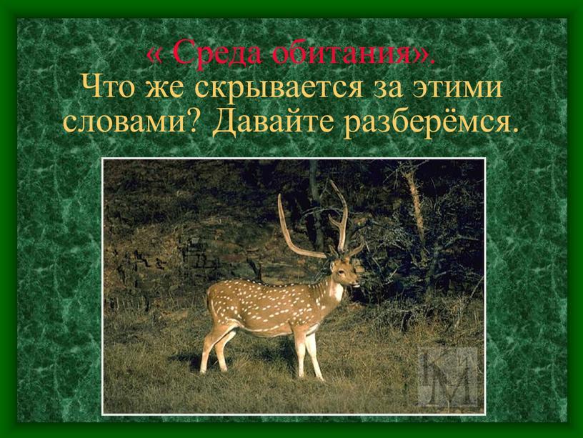 Среда обитания». Что же скрывается за этими словами?