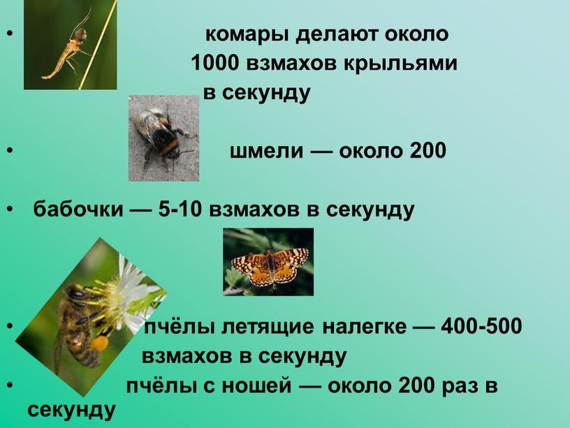 комары делают около 1000 взмахов крыльями в секунду шмели — около 200 бабочки — 5-10 взмахов в секунду пчёлы летящие налегке — 400-500 взмахов в…