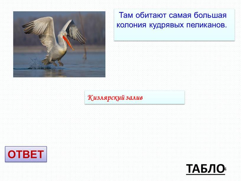 ТАБЛО Там обитают самая большая колония кудрявых пеликанов