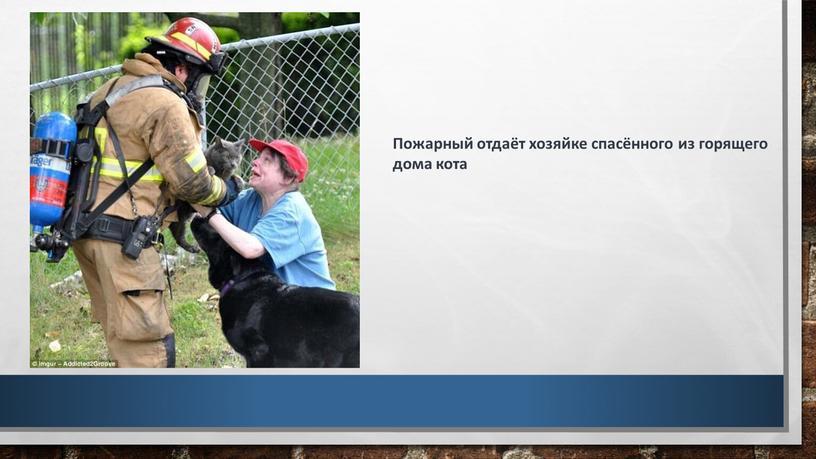 Пожарный отдаёт хозяйке спасённого из горящего дома кота