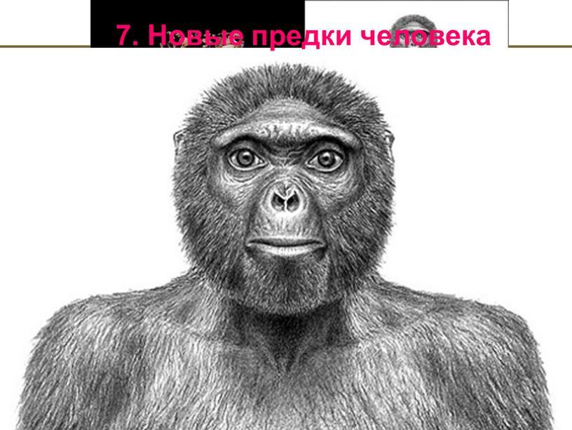 7. Новые предки человека