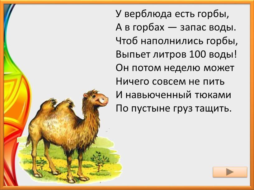 У верблюда есть горбы, А в горбах — запас воды