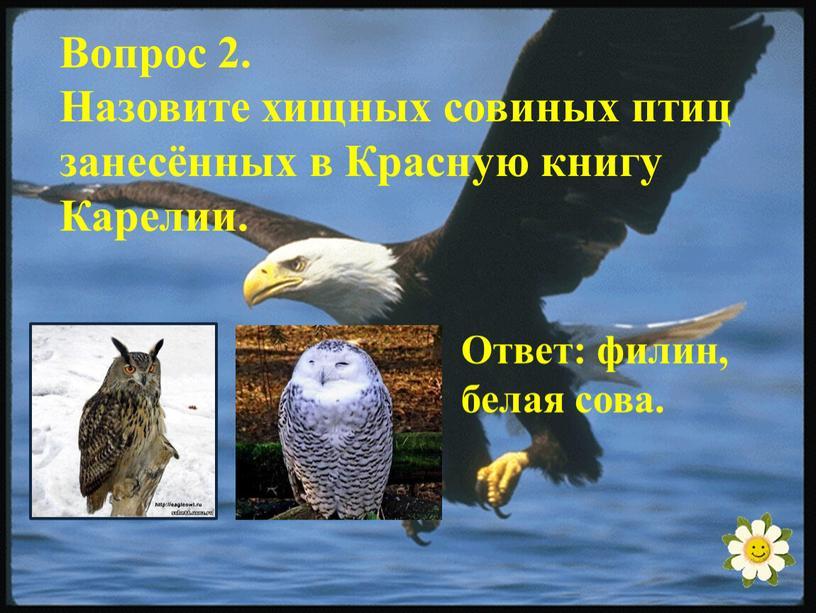 Вопрос 2. Назовите хищных совиных птиц занесённых в
