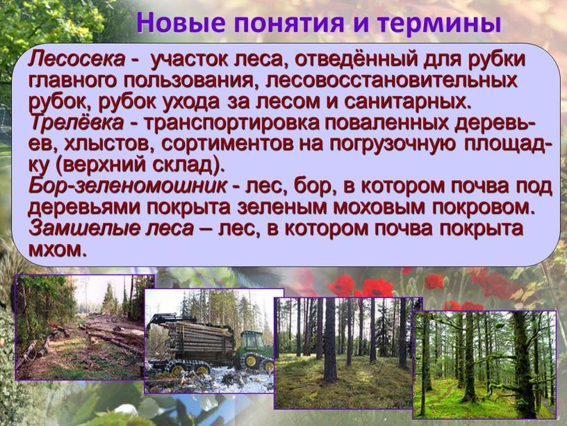Новые понятия и термины Лесосека - участок леса, отведённый для рубки главного пользования, лесовосстановительных рубок, рубок ухода за лесом и санитарных