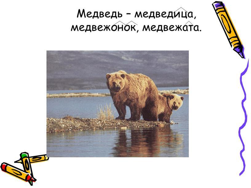 Медведь – медведица, медвежонок, медвежата
