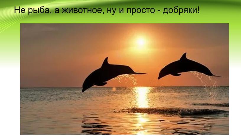 Не рыба, а животное, ну и просто - добряки!