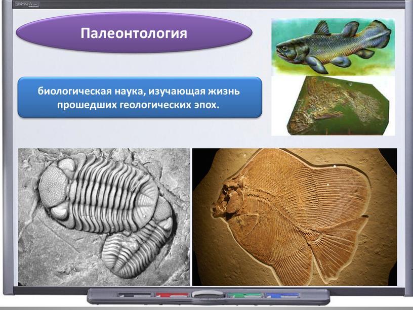 Палеонтология биологическая наука, изучающая жизнь прошедших геологических эпох