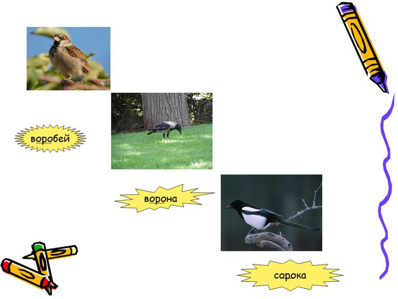 воробей ворона сорока