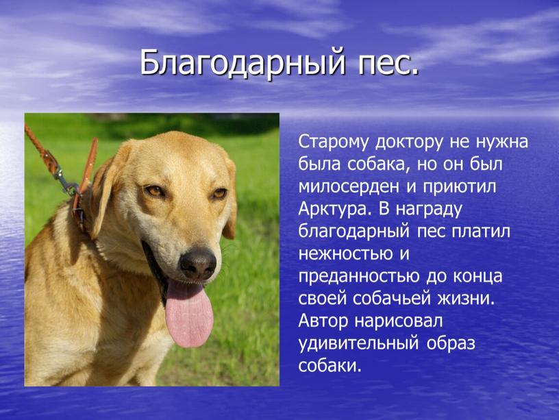 Благодарный пес. Старому доктору не нужна была собака, но он был милосерден и приютил