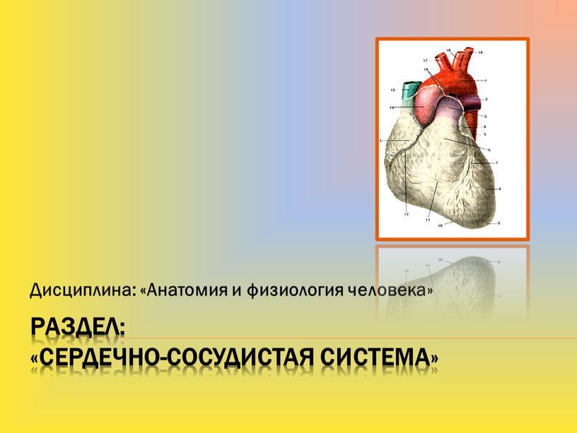 Раздел: «Сердечно-сосудистая система»