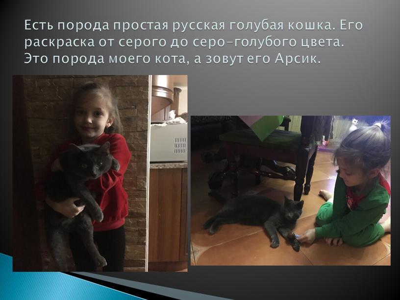 Есть порода простая русская голубая кошка