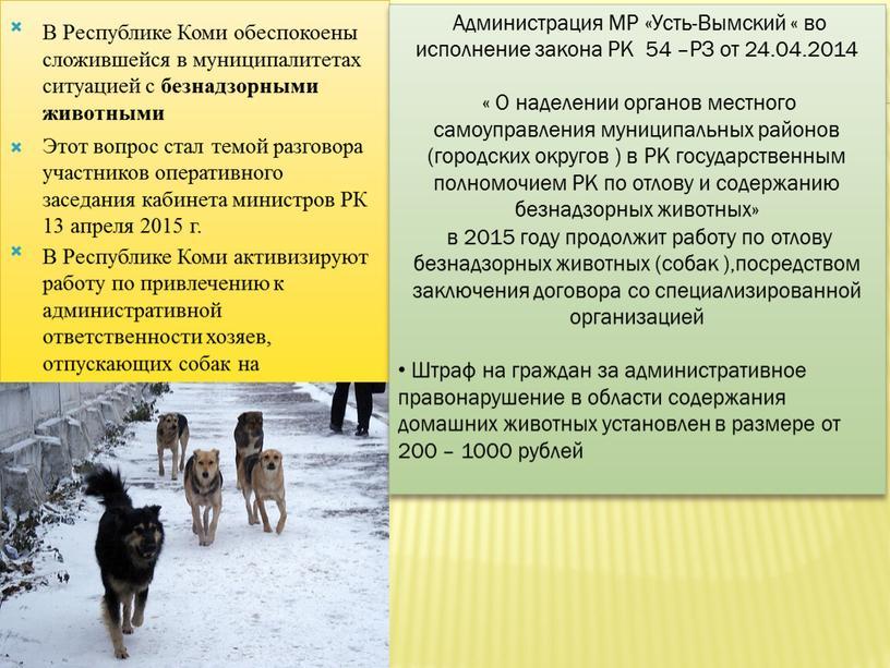 В Республике Коми обеспокоены сложившейся в муниципалитетах ситуацией с безнадзорными животными