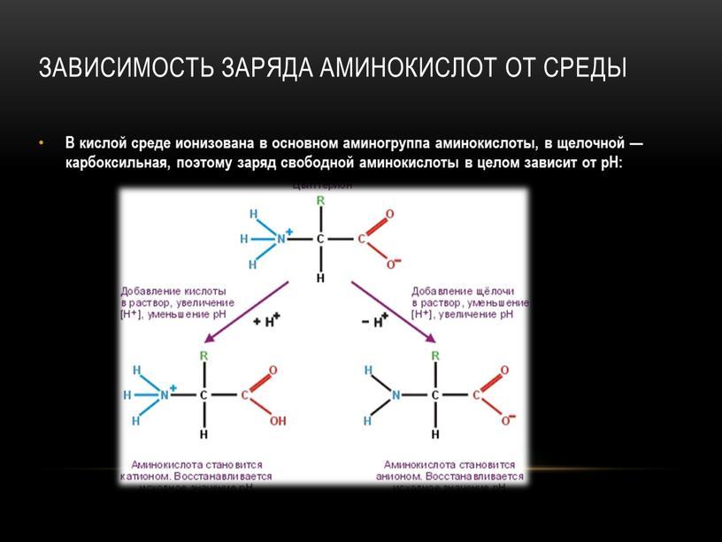 Зависимость заряда аминокислот от среды