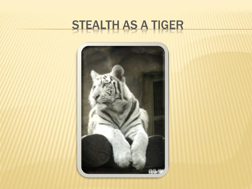 Stealth as a tiger