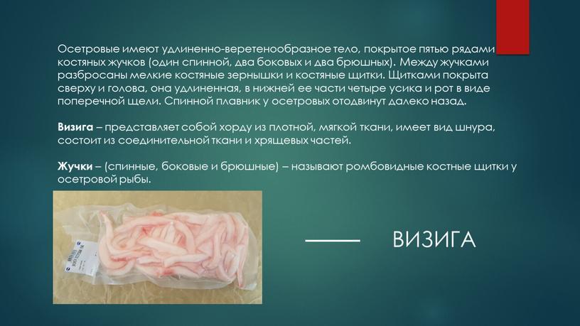 Осетровые имеют удлиненно-веретенообразное тело, покрытое пятью рядами костяных жучков (один спинной, два боковых и два брюшных)
